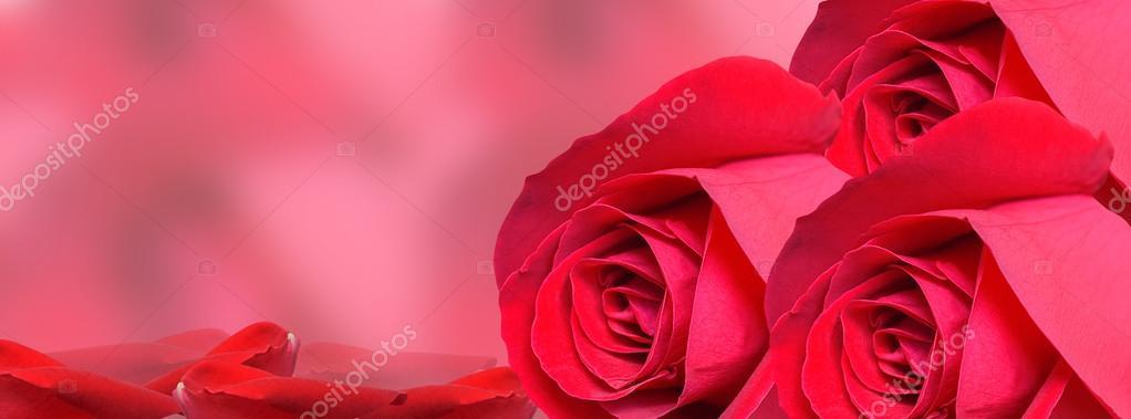 Red Rose background -facebook timeline