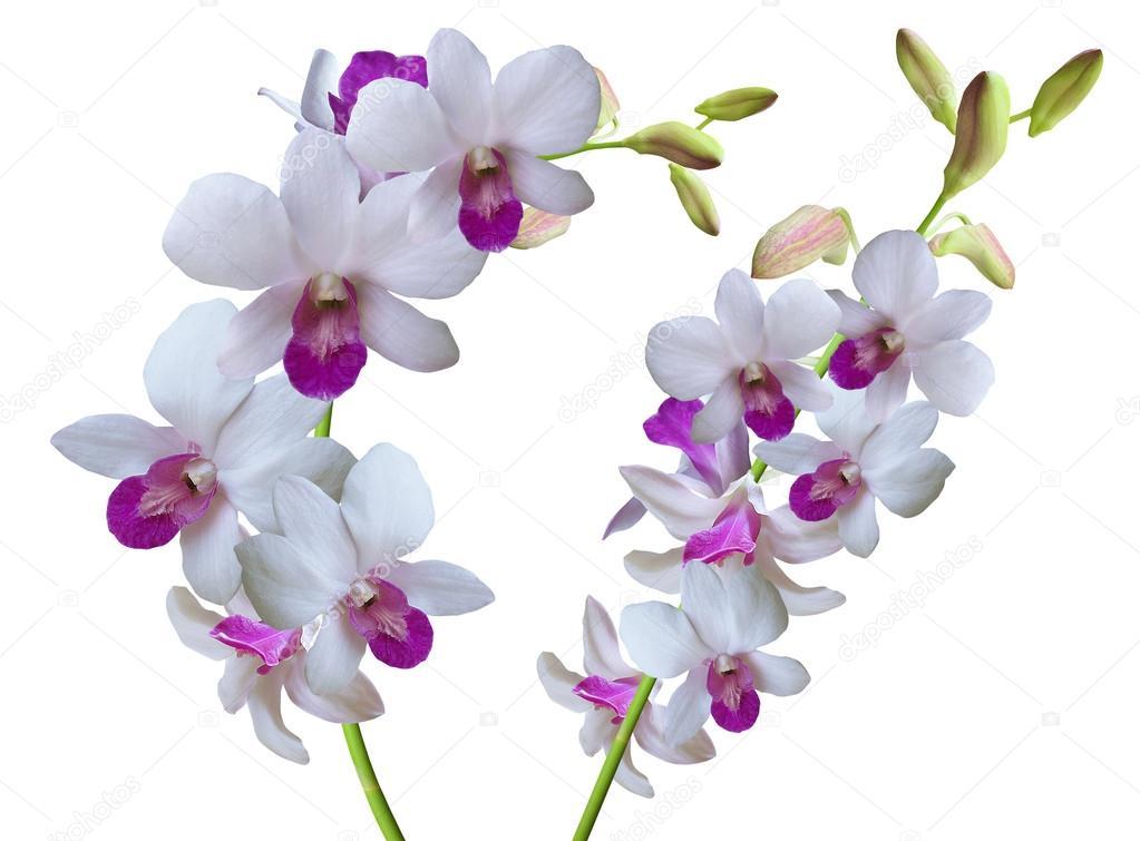rama de orquídeas flores blancas foto de stock gracel1221 56785179
