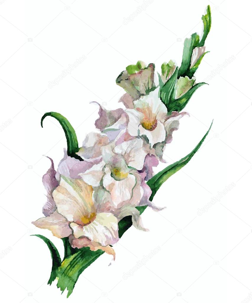 gladiolus flowers painted