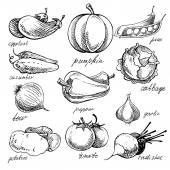 Fényképek A különböző doodles, kézzel rajzolt zöldségek