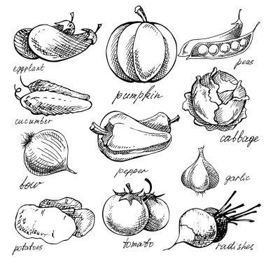 Set of various doodles, hand drawn vegetables.