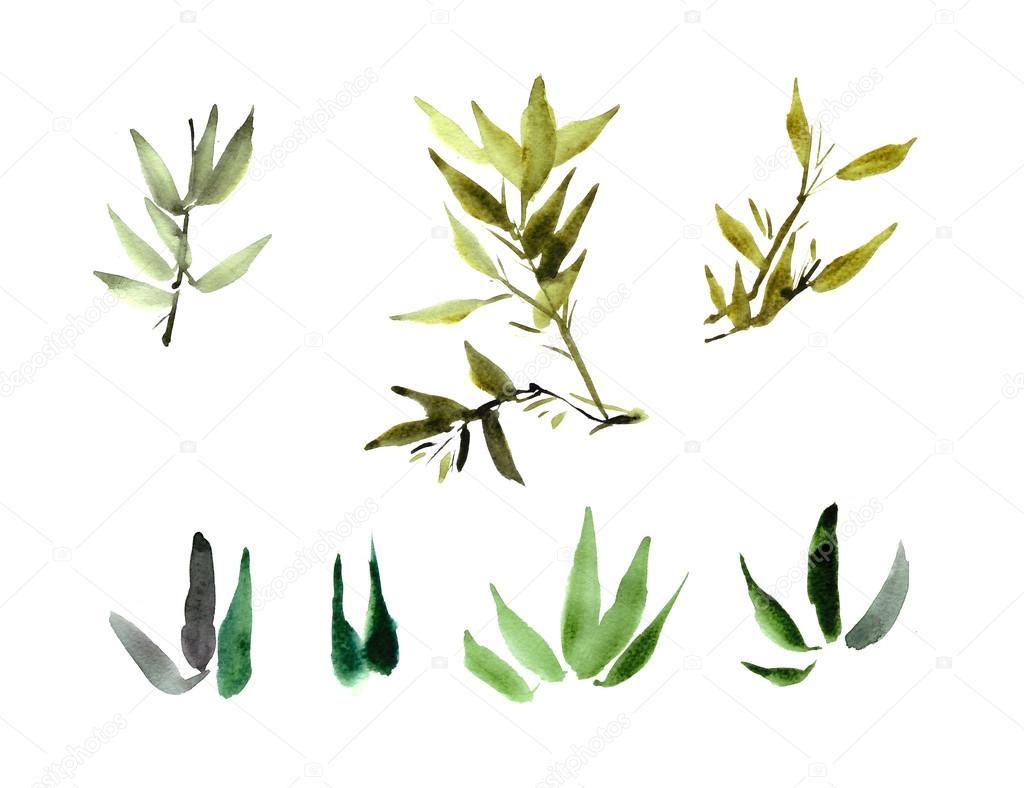 Foglie della pianta di bamb dell 39 acquerello foto stock for Pianta bambu prezzo