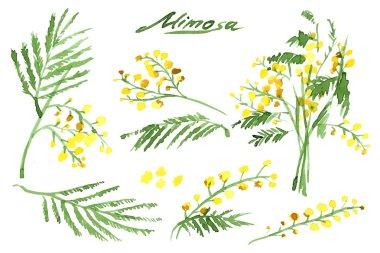 Set of Hand-Drawn Mimosas