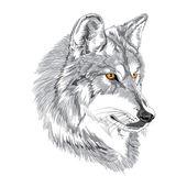 Photo Wolf muzzle sketch