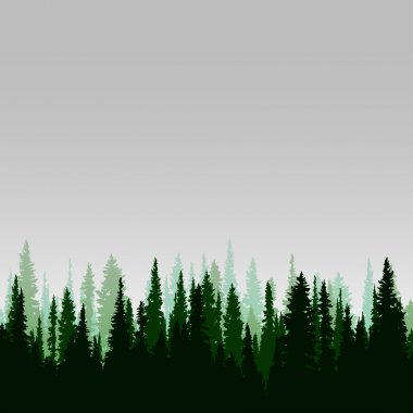Vector panorama of wild coniferous forest with pines stock vector