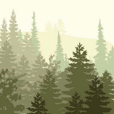 Panorama of wild coniferous forest