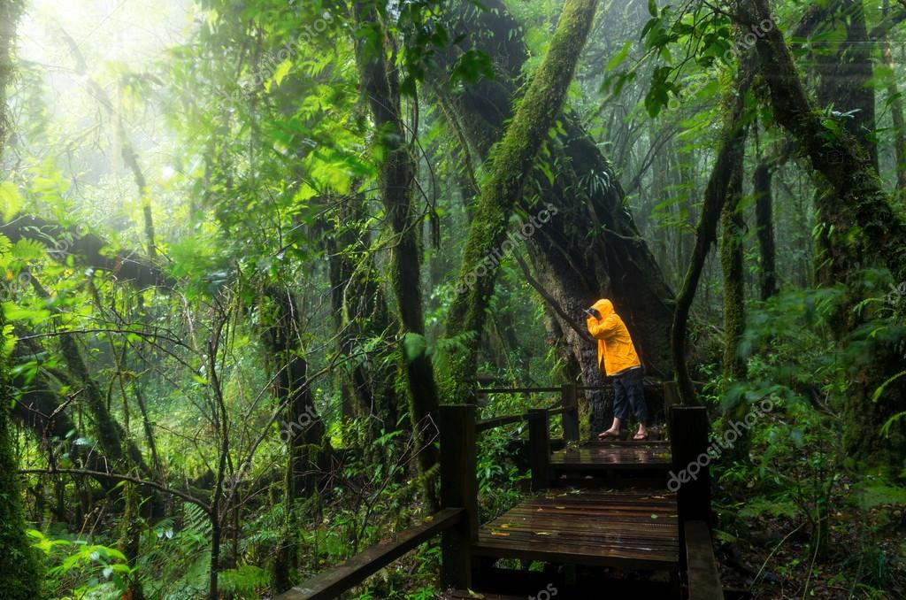 Traveller taking photo at Beautiful forest