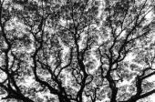 Větev stromu v černé a bílé