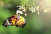 Fotografie butterfly in the garden with sun light