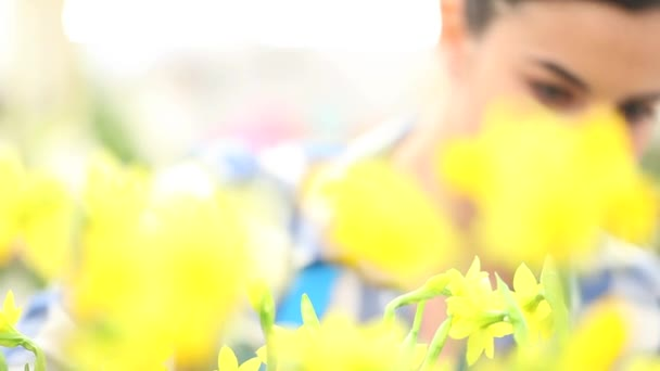 spring concept, woman  in garden takes care of flowers narcissus