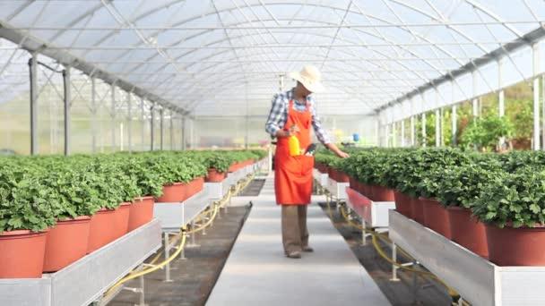 žena v práci, skleník s sprej, péče o rostliny k růstu