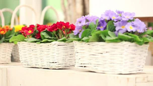 tavaszi kert fogalma, nő virágüzlet, mosolygó, fehér fonott kosár virágok a lila kikiricstől