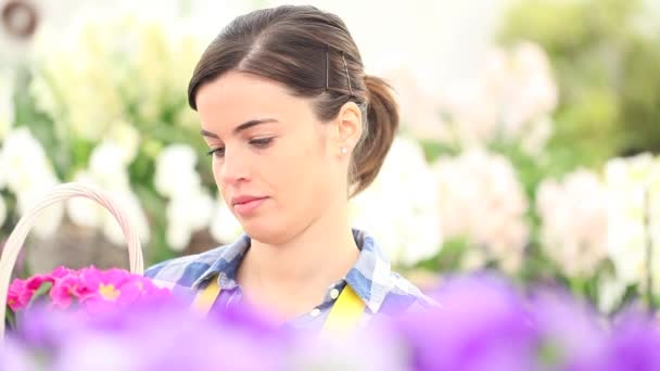 garden springtime concept, woman florist smiling with white wicker basket flowers of purple primroses