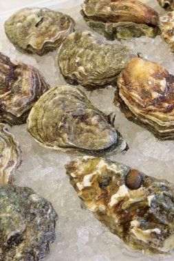 fresh oysters closeup