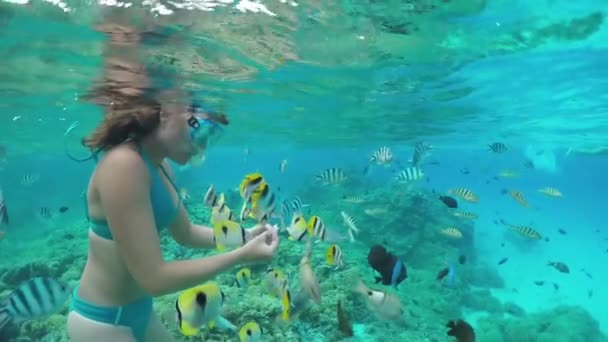 SLOW MOTION UNDERWATER: Woman snorkeling and feeding exotic reef fish