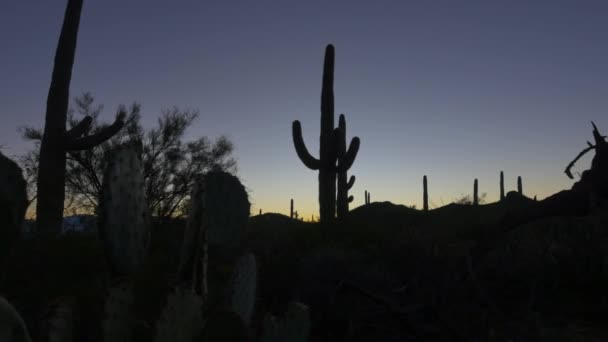 CLOSE UP: Cactus silhouette against colorful sky before the sunrise