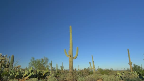 Saguaro, cholla and opuntia cactuses in vast Arizona desert landscape