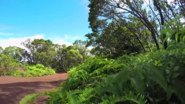 Záběr: Mladé kapradí na straně turistická trasa v havajské sopky