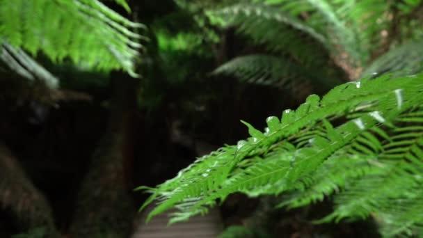 Makro: Pohled mladých zelených svěžích kapradina s dřevěným mostem v pozadí