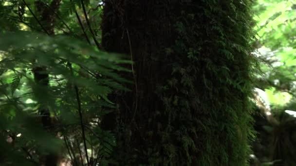 Zblízka: Pohled zarostlé mechem svěží kmen na krásný slunečný letní den