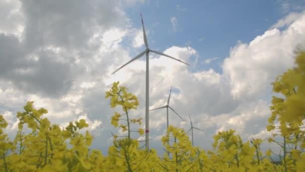 Primi piani: Belle giallo fiori di rapa che fioriscono accanto a grandi mulini a vento bianchi