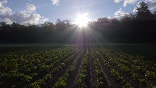 zemědělství pole