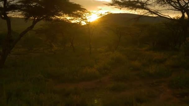 Sun setting behind acacia trees