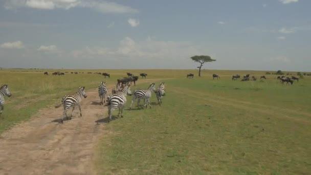 GNU e zebre
