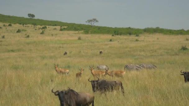 Animali selvatici in safari africano