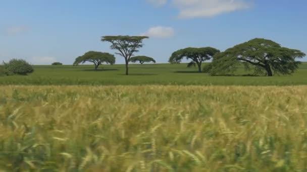 oříznutí pole