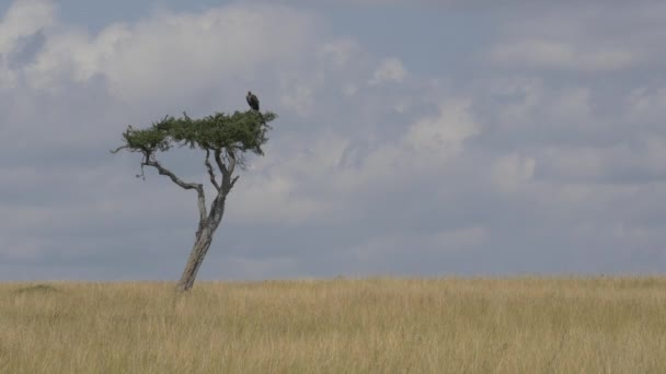 Sup na solitérní strom