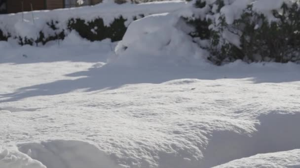 Cat jumps into the fresh snow