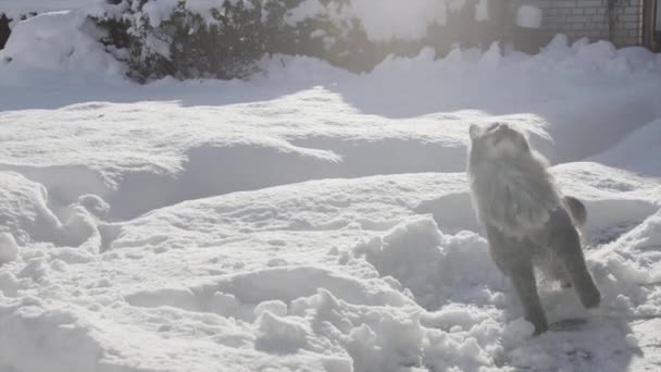 Cat catching a snowball in snow
