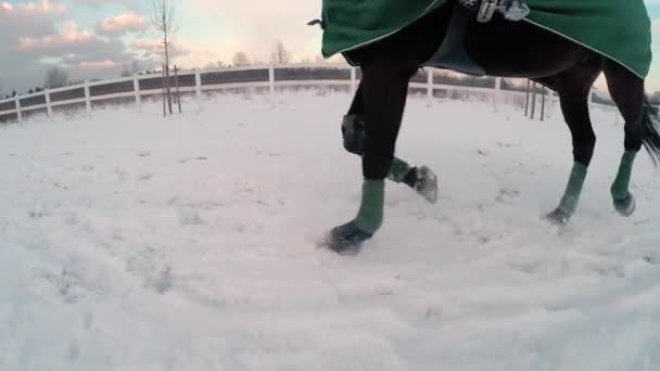 Big black horse trotting in snow