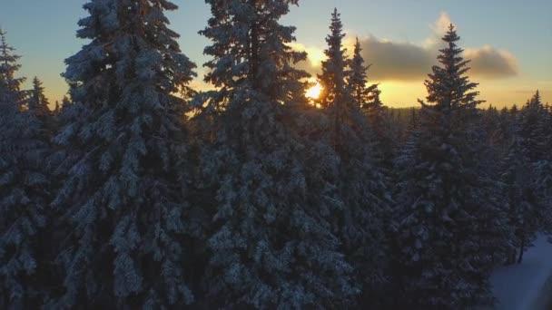 Slunce svítí přes krásné zimní Les