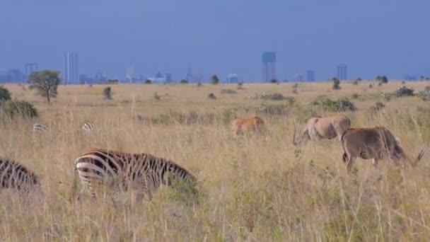 Wild animals in front of Nairobi