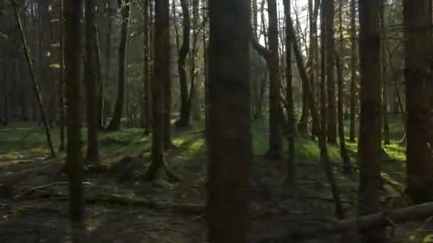 In esecuzione attraverso il passo di foresta muscoso i tronchi dalbero