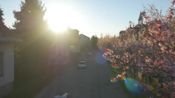 AERIAL: Cherry trees blooming in sunny suburbia