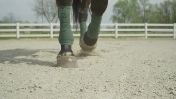 SLOW MOTION CLOSE UP: Horse walking towards camera in menage