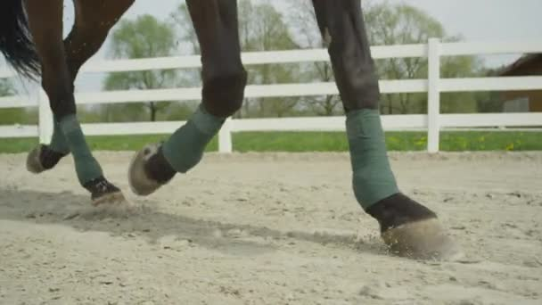 SLOW MOTION CLOSE UP: Dressage horse trotting in sand arena