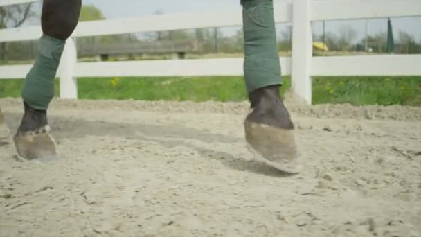 SLOW MOTION CLOSE UP: Black horse running in sand arena