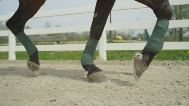 SLOW MOTION CLOSE UP: Dressage horse running in sand arena