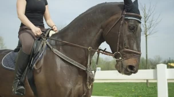 SLOW MOTION: Dressage female rider horseback riding in arena