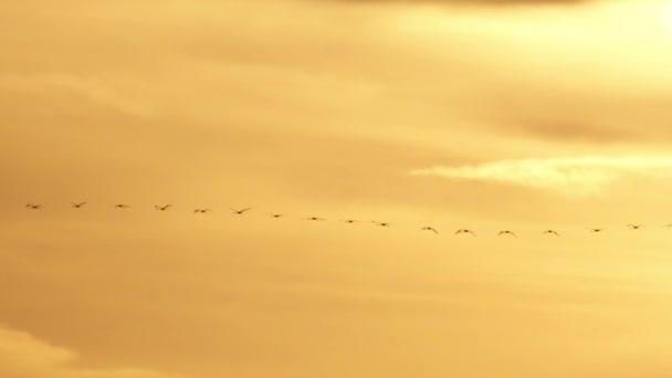Plameňáků létání nad na úžasné letní slunce