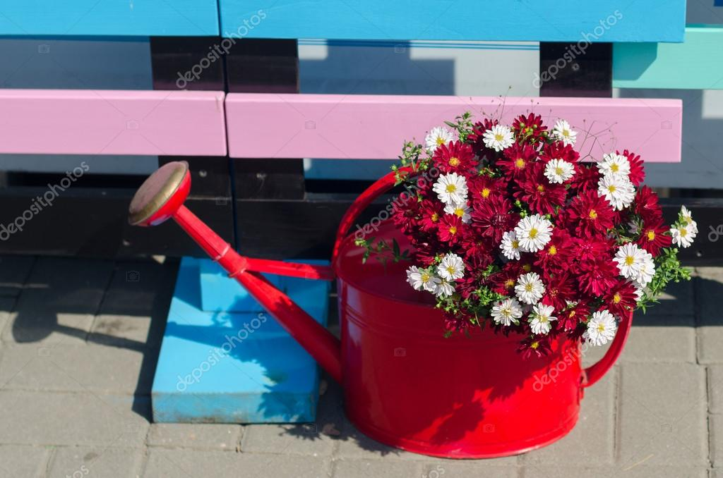 colorful Asters flowers in red watering can