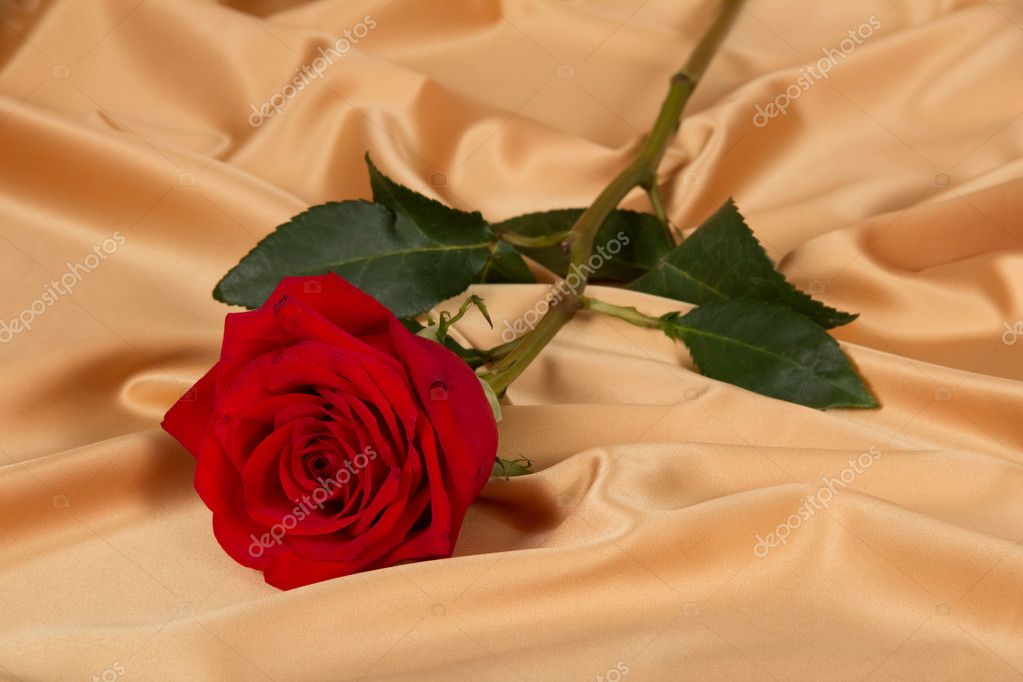 Rose on golden cloth