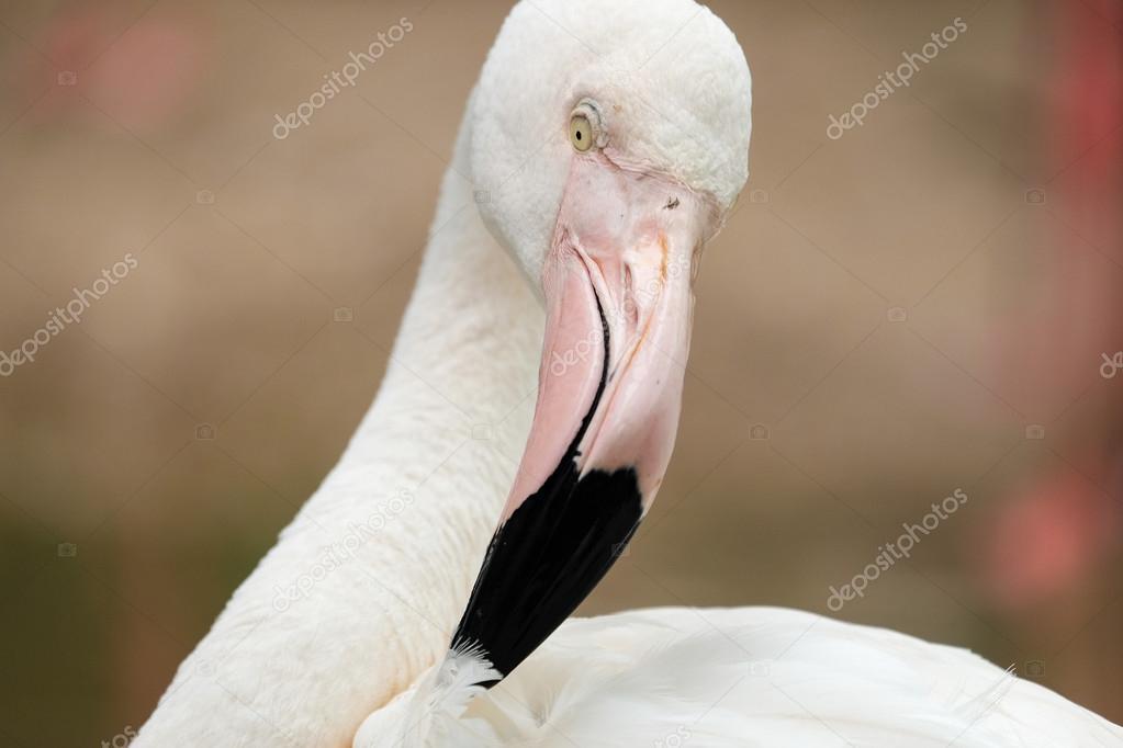 Όμορφο μεγάλο πουλί