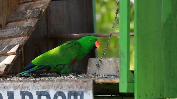 A bild lánc papagáj