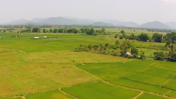 Luftaufnahmen von landwirtschaftlichem Reis