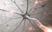 Agy és idegrendszer neuron